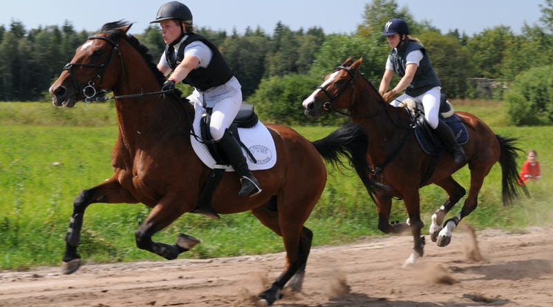 "Webinar: ""Antioxidant Research & Its Applications For Use In Exercising Horses"""