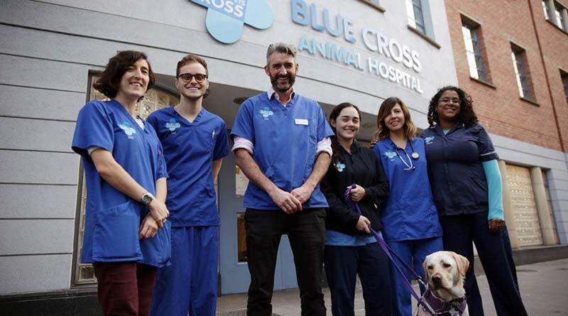 Staff and volunteers at Blue Cross will appear in the new television series Inside Animal A&E.