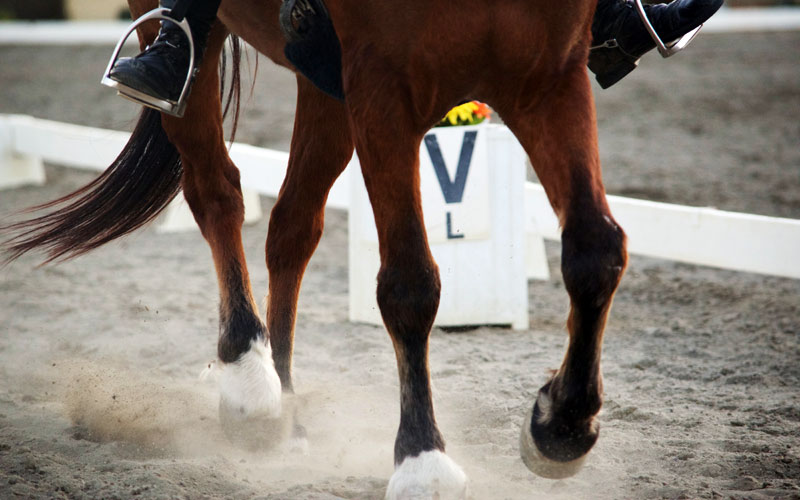 Horses used for showing, working equitation, eventing, as well as traditional working horses, were bolder than those used for other disciplines.