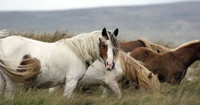 Diet and the insulin response in metabolic horses under scrutiny