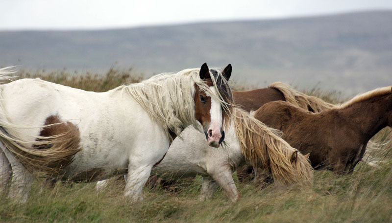 """""""Understanding How Diet Composition Influences Insulin Response in Horses with Equine Metabolic Syndrome,"""" is a one-year study by Amanda Adams from the University of Kentucky's Gluck Equine Research Center."""