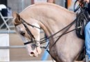 """""""Why does my horse do that?"""" New series delves into the mysteries of horse behaviour"""
