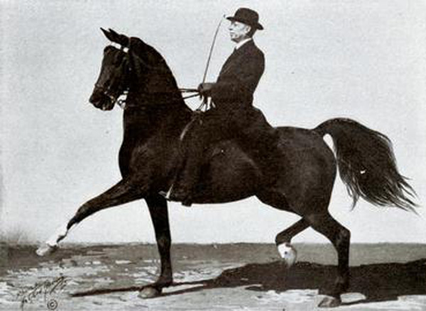 Horse trainer Tom Bass and the American Saddlebred mare, Belle Beach.