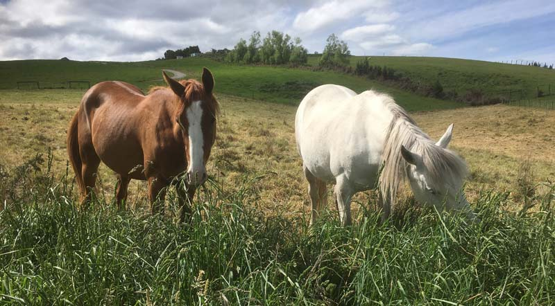 Do less dominant horses get to eat less? Or do they simply spend more time foraging to make up for any shortfalls in eating time?