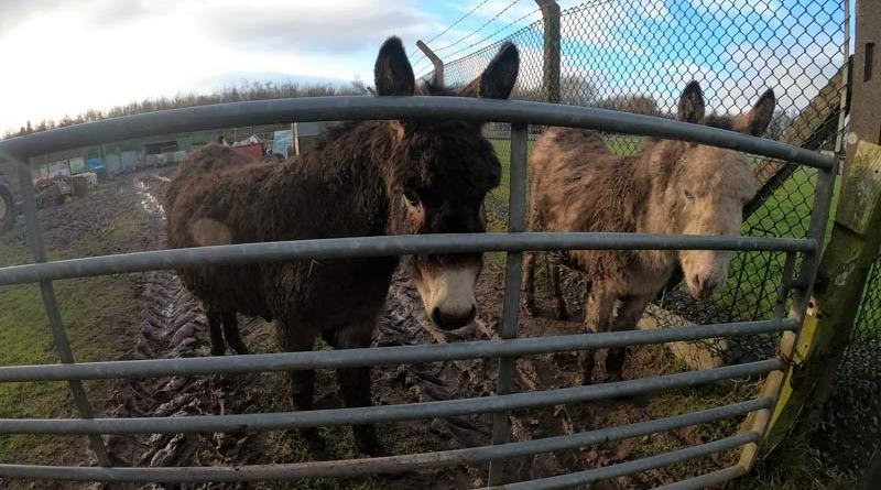 Della, left, and Mary at the smallholding in Carlisle.