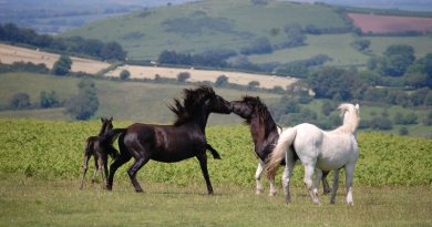 Rare breeds and equine obesity explored in National Equine Forum webinars