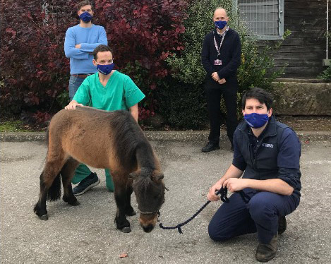 Duncan at his most recent check-up with the veterinary team at the Philip Leverhulme Equine Hospital, from left, Andy Tomlinson, Dave Stack, Professor Rob Pettitt and Matt Cullen.