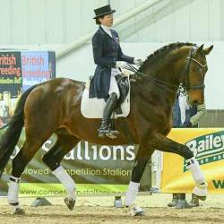 Dressage stallion Durable at a previous Stallion Event. © Tanja Davis/British Breeding