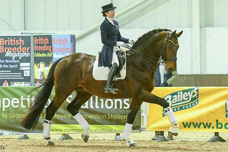 Dressage stallion Durable at a previous Stallion Event.