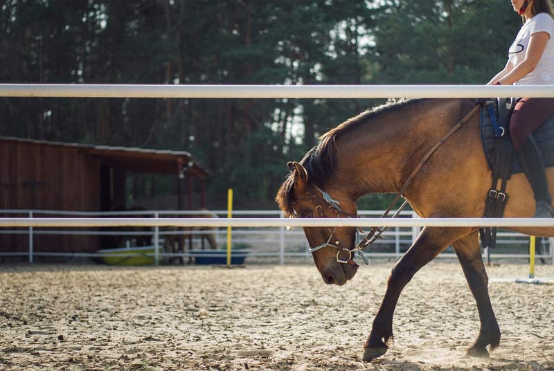 The responsiveness of horses tends to decline when they are ridden by multiple riders, researchers found.