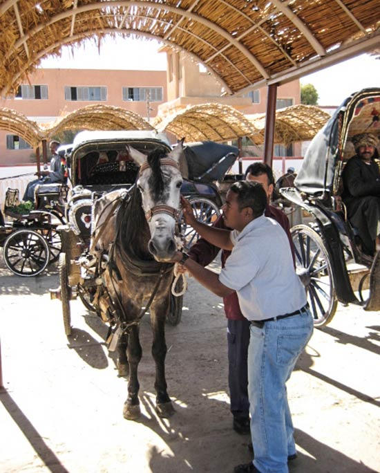 When assessing tourist horses at their work place in Egypt, disruption to the animal is minimised by not removing harness and checking carefully underneath it.