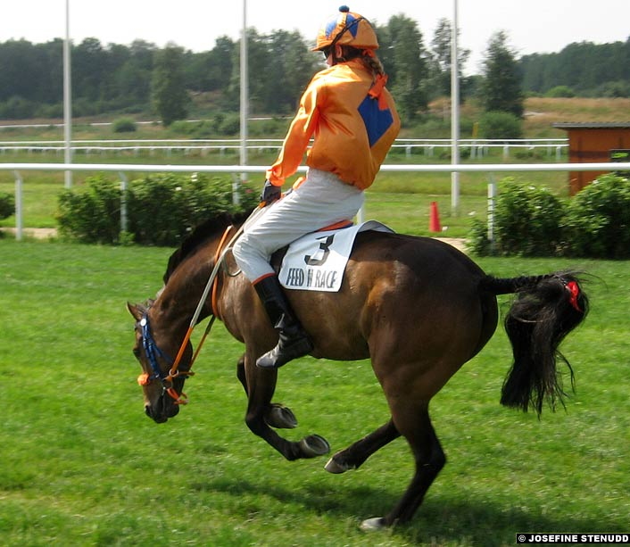 A jockey in Sweden rides out a buck.