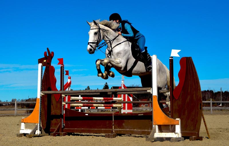 Researchers in Hungary assessed that a 100cm jumping course was not particularly strenuous exercise for showjumping horses.
