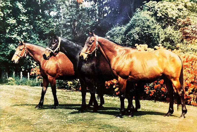 Sunbride's three great staying sons pictured in retirement at Te Parae; from left, General Command, Ilumquh and Straight Draw.