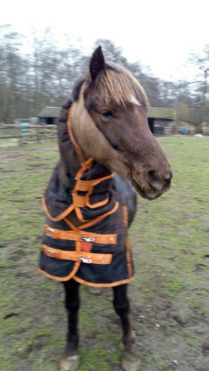 World Horse Welfare George, known to his friends now as Ted, won the 'Rescue Horse or Pony' category at this year's Carriage Driving Awards 2020 after blossoming in the care of his rehomer, Liz.