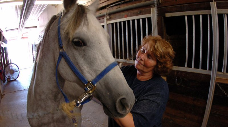 Researchers say lockdown was a challenging time for equestrians, who had to balance maintaining their equine's routine and daily care alongside biosecurity measures.