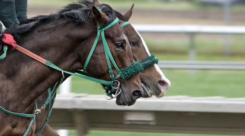 The 69th Annual Round Table Conference on Matters Pertaining to Racing will cover topics including Thoroughbred aftercare opportunities and challenges