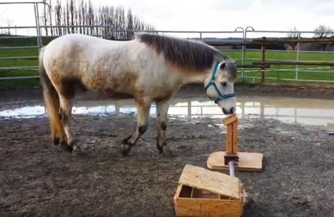 A horse uses a switch to open a feeding box.