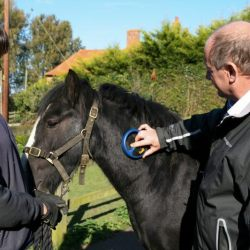 A horse in Britain is checked for a microchip. Photo: World Horse Welfare