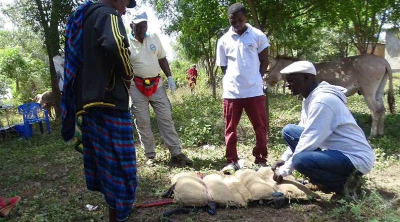MAWO trains farmers to make humane saddle packs for donkeys from local recycled materials.