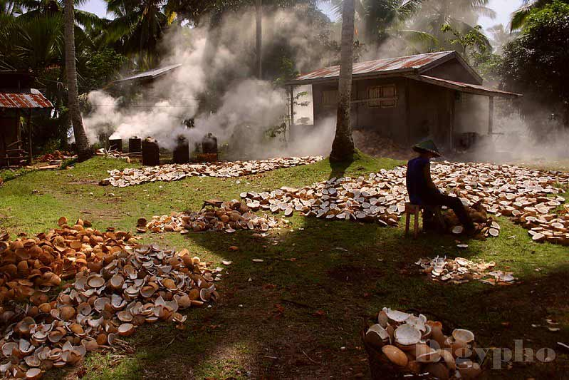 Copra processing in the Philippines.