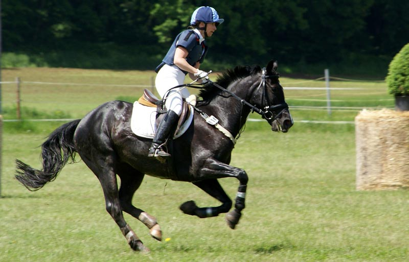 Observational studies suggested that in gallop, horses do not exhibit substantial bending of the spine.