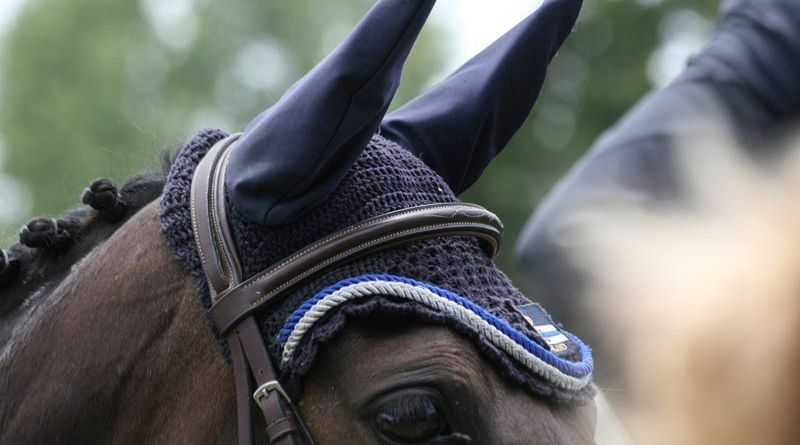 A British survey has shown that veterinarians were more likely to comply with competition guidelines than with datasheet advice on equine influenza vaccinations.
