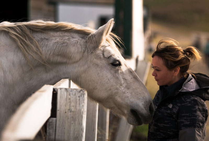 Can a simple questionnaire can help owners recognize signs of chronic osteoarthritis pain in their horses?