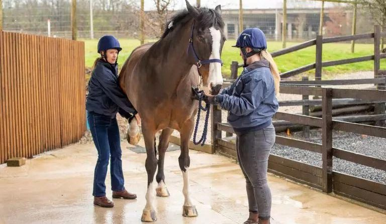 Staff at VetPartners practices are being encouraged to wear safety helmets when working with horses.