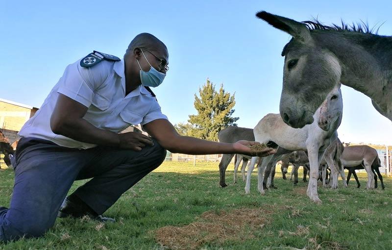 Safe: A donkey makes a new friend at an NSPCA safe facility.