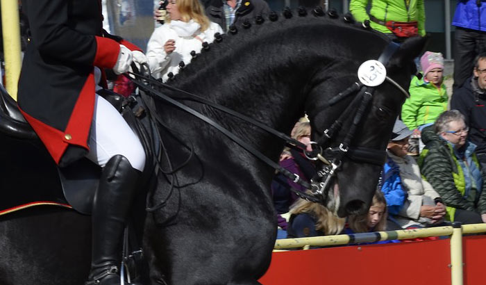Equestrian Canada is working towards the implementation of a rule that reflects scientific recommendations that an equine's noseband should not be tight enough to prevent the placement of two adult fingers between the noseband and the frontal nasal plane.