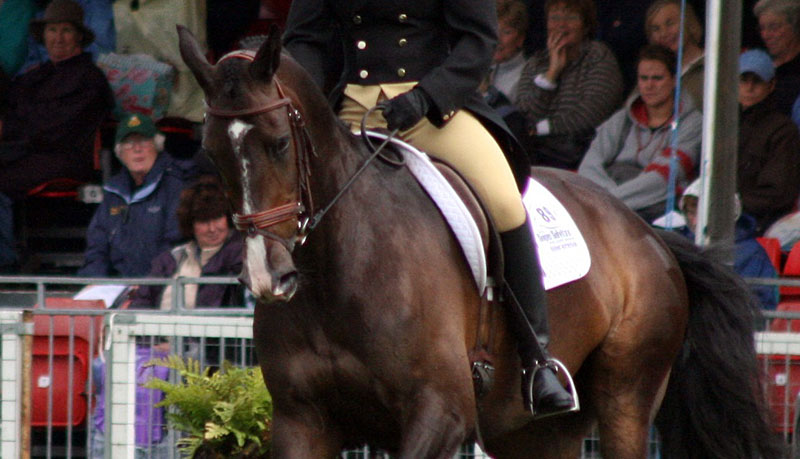 Researchers applied RHpE scale to 64 horses and compared their scores to those of World Cup level dressage mounts.