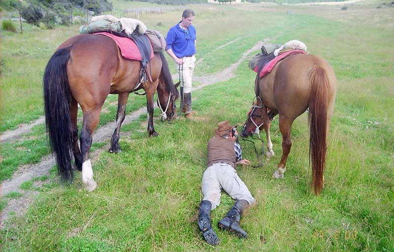 It is essential your horses get plenty of sustenance during the trip.