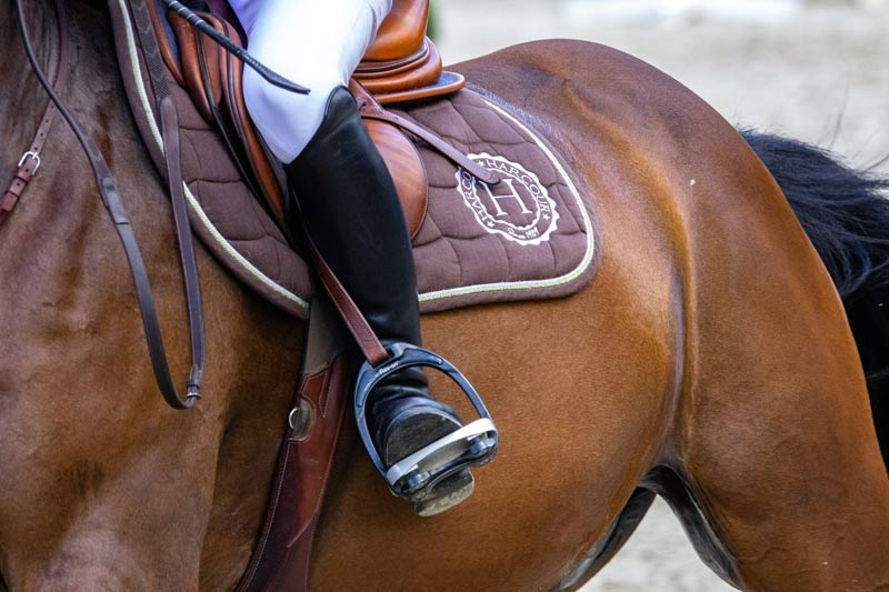 While the need for the development of ethics for the use of animals in sport is anecdotally recognized, efforts by regulators and stakeholders in equine sport have tended to be discipline-specific and ad hoc, Campbell said.