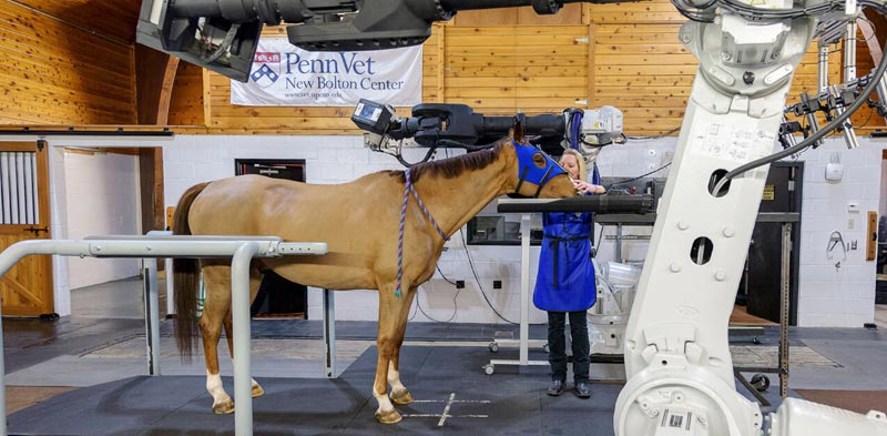 The new Mars Equestrian Veterinary Research Scholar program builds on the Mars Equestrian Early Career Investigator program.