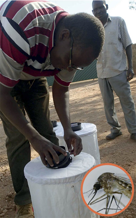 A total of 17,826 female mosquitos were gathered between 2012 and 2019 in Zambia. Traps that produce odor attractant and a common mosquito Culex quinquefasciatus (inset) that was found to be a vector of West Nile virus.
