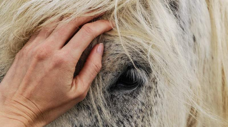 The researchers said more robust evaluations of welfare, including measurements of the horse's underlying emotional state during human-horse interactions, were warranted.