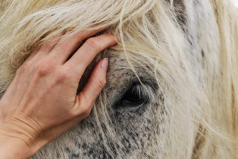 Fresh study provides a foundation for early biomonitoring and prevention of equine melanomas.