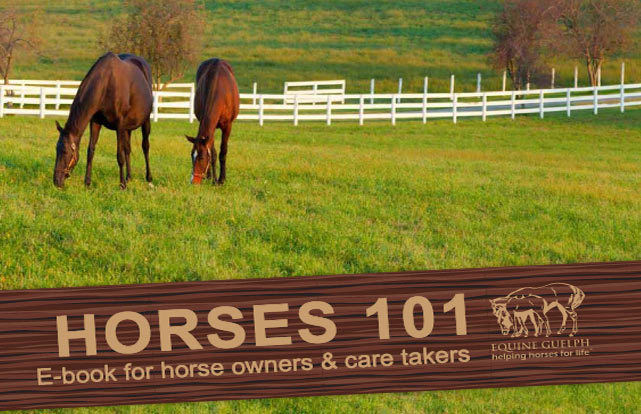 The Horses 101 Ebook for horse owners and care takers has been created by Equine Guelph.