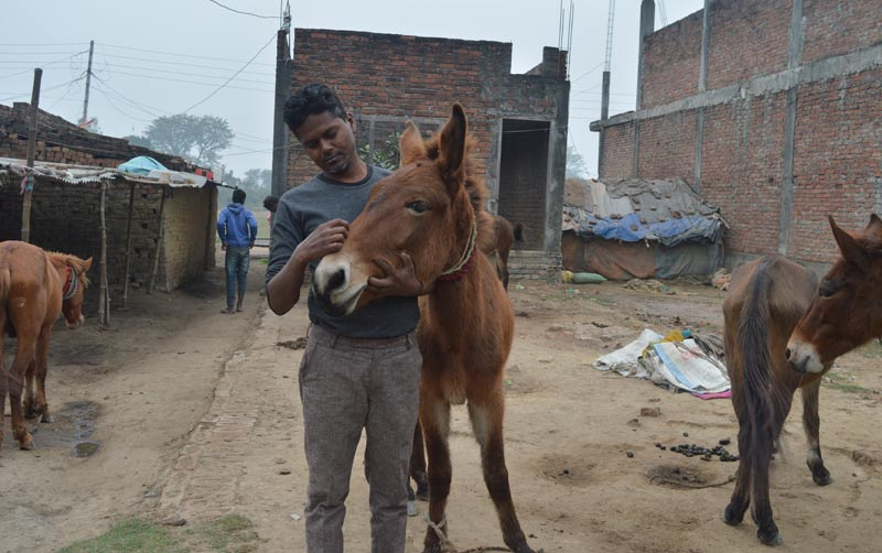 An owner with his mule away from work in Nepal's brick kiln industry.