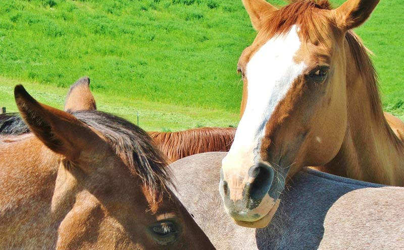 """""""Greater efforts are needed to encourage horse owners to take advantage of vaccination if continued losses from West Nile virus infection are to be reduced or even eliminated."""""""