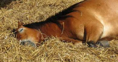 Seeking to ease tension in your horse? This 10-minute soundtrack might do the trick.