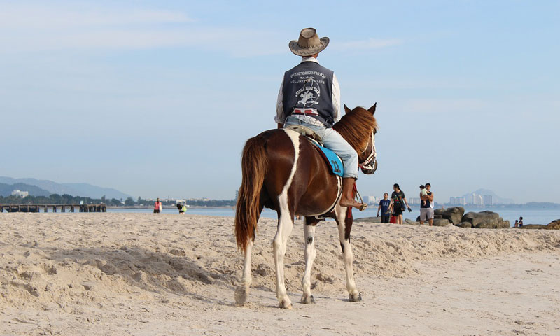 Last year's outbreak of African Horse Sickness in Thailand probably arose from a single introduction of the virus into the country, the findings of molecular-based testing suggest.