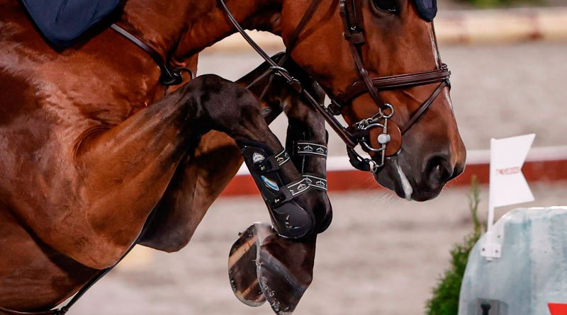 Individual silver and team gold medalists Peder Frederickson and All In in the team final at Tokyo 2020. All In, and team mate King Edward, jumped barefoot at the Olympic Games.