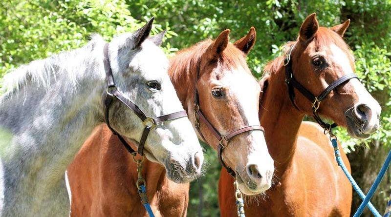 Most owners use a combination of actual age in years and physiological age to judge if their individual horse has moved into the senior bracket.