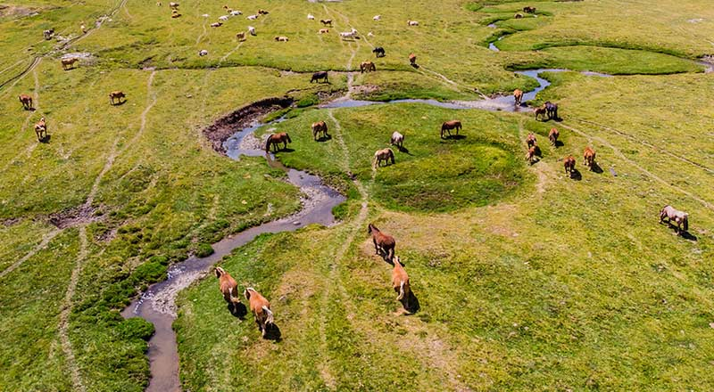 The researchers set out to learn about the potential for drone use in livestock management, using the technology to observe horse behavior and verify the appropriate horse–drone distance for aerial behavioral observations.