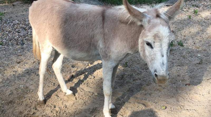 Scientists have discovered a previously unknown hepatitis B virus in donkeys.