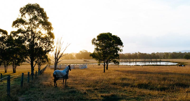 C. psittaci has remained an annually reported cause of foal loss in the Hunter Valley region of Australia - a major Thoroughbred breeding center