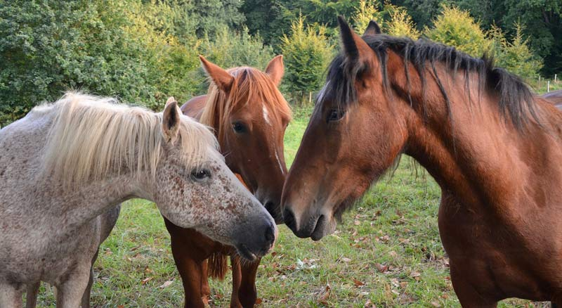 Equine herpesvirus-2 (EHV-2) is commonly shed by healthy horses in Switzerland, the findings of fresh research suggest.
