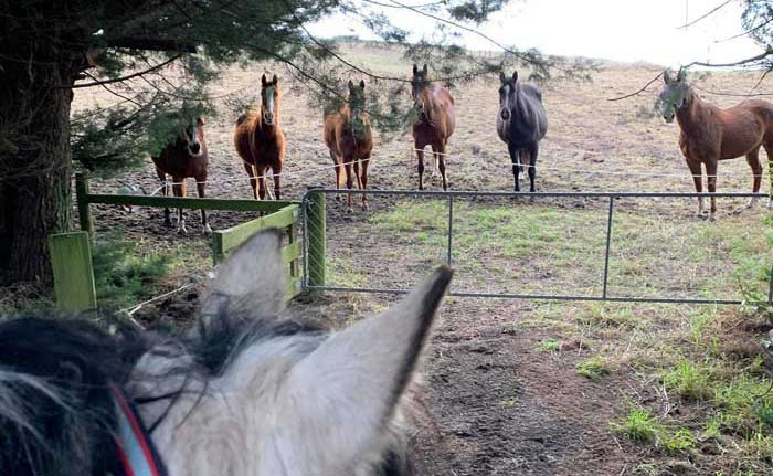 Researchers in Poland set out to explore what occurs in a herd of horses during a short social separation of individuals differently ranked in the dominance hierarchy.